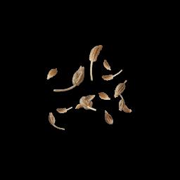 fliegender Anis