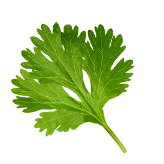 schwebendes Korianderblatt