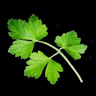 fliegendes Petersilienblatt