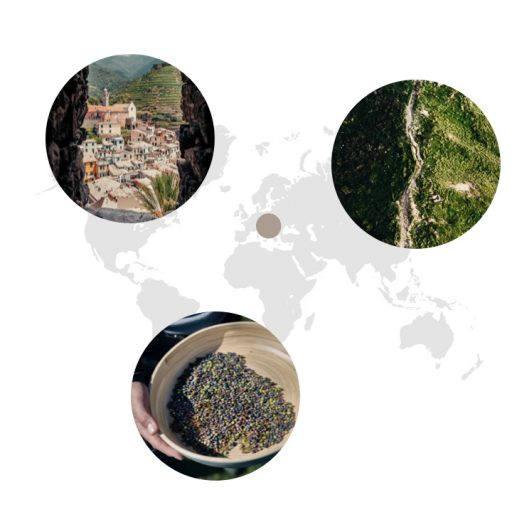 Wacholder Landkarte Edit