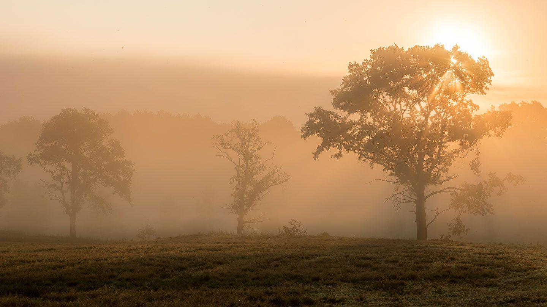 Herbstliche Landschaft im Morgentau