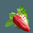 Paprika, Rosa Beeren, Petersilie, Basilikum und Zwiebel