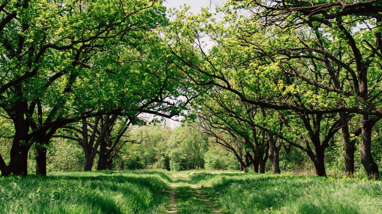 Eine Waldlichtung im Frühjahr