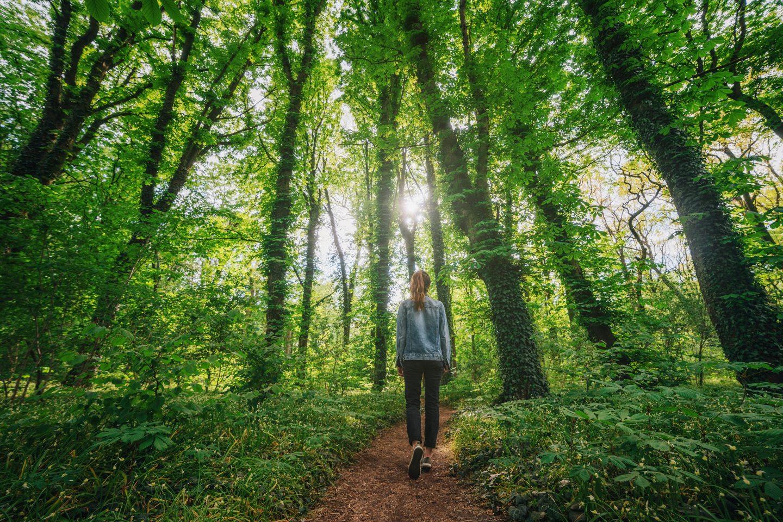 Frau geht in lichtem Laubwald spazieren