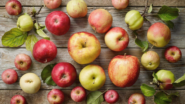 Einige unterschiedliche Apfelsorten sind auf einem Holztisch ausgelegt.