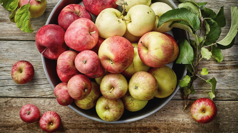 Verschiedene Apfelsorten aus Österreich in einer Schüssel.